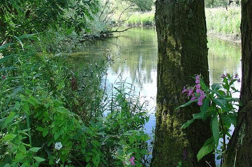 Balsemienhoning uit de Brabantse Biesbosch
