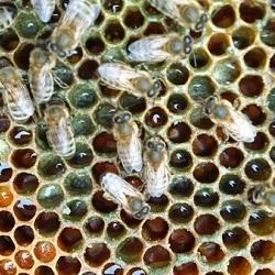 Werk bijen
