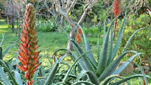 aloe-header-featured