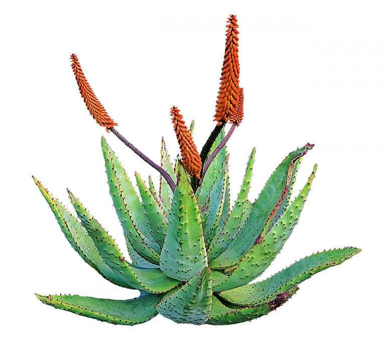 aloe-vera-disclaimer