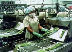 Aloë Vera fabriek