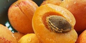 Abrikozenpitten Bevatten Giftig Cyaan