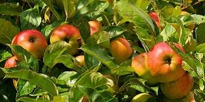 Oplossingen met appelazijn