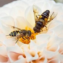 super voedsel van de bijen api totaal