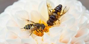 supervoedsel van de bijen-api totaal