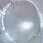 bevroren kristal, van water na verwarming in de magnetron