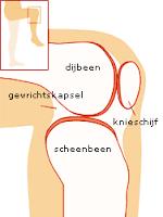 kraakbeen