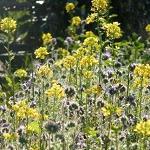 Bijen bloemenzaad