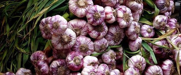 Kan Je Te Veel Knoflook Eten, Allium sativum Knoflook Garlic