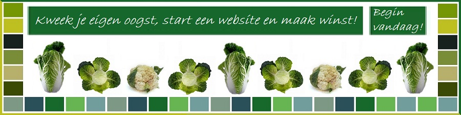 Start je eigen website begin vandaag