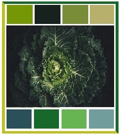 Word Fan van Kool, 15 shades of green, groene kool