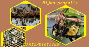 Bijen propolis anti-bioticum